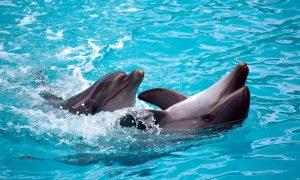 Pažinkite delfinus!