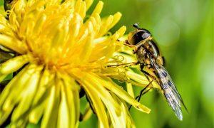 Ką daryti įgėlus bitei?