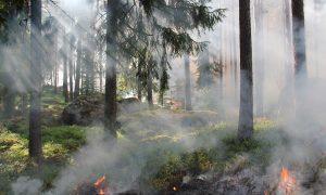 Pernykštės žolės deginimas pavojingas gamtai ir žmonėms