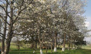 Pavasaris sodyboje