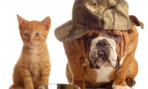 Šunys ir katės platina ligas