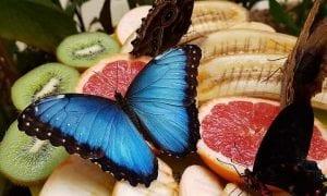 Kaip sveikai vartoti vaisius?