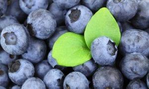 Mėlynės – senėjimą stabdantis turtas
