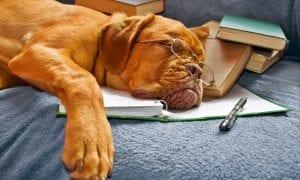 Kaip užtikrinti miego kokybę?