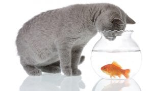 Receptai su žuvimi