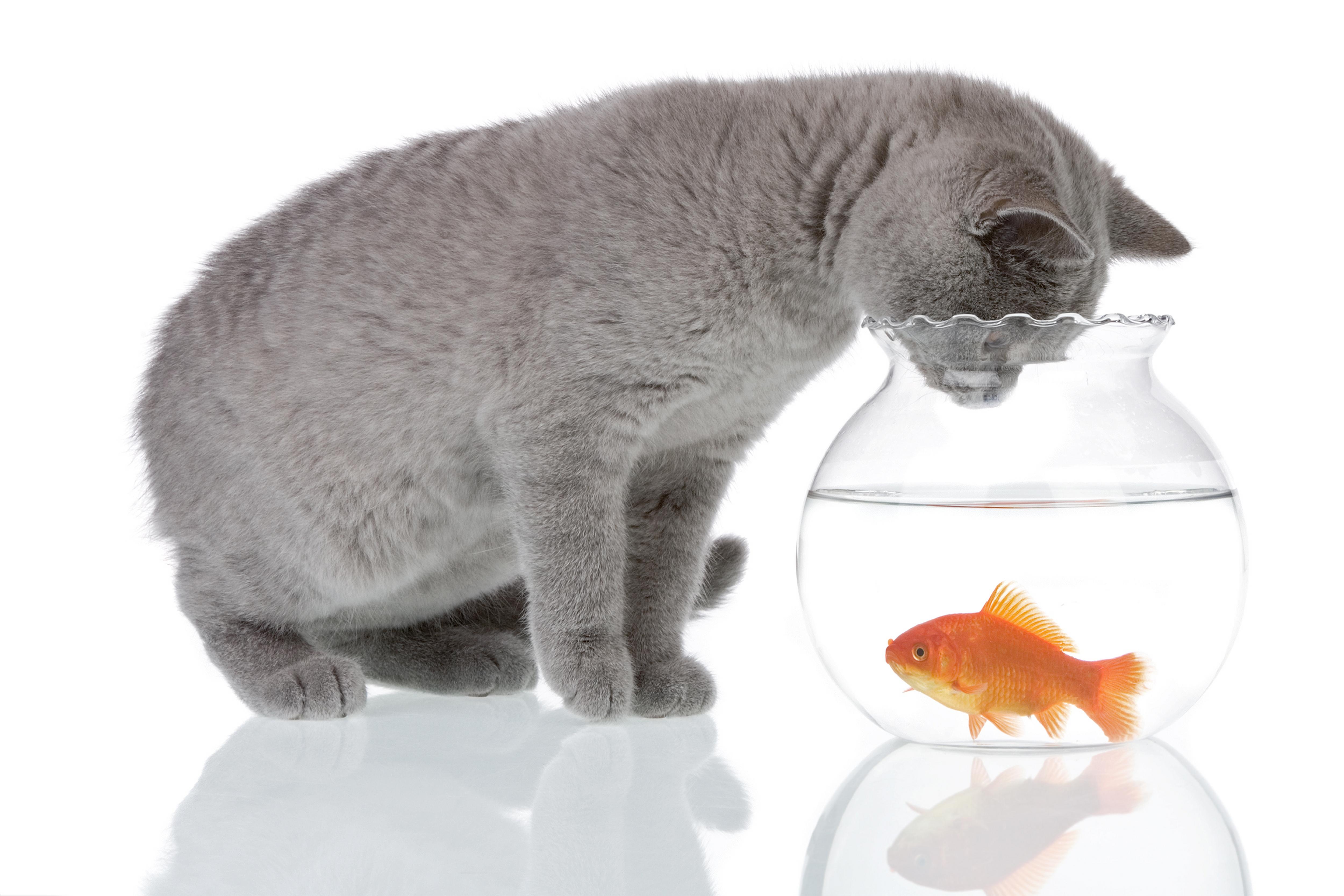 4 patarimai, kaip pasirūpinti akvariumo žuvytėmis