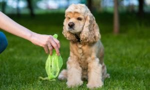 Šuns ekskrementai gatvėse – pavojus