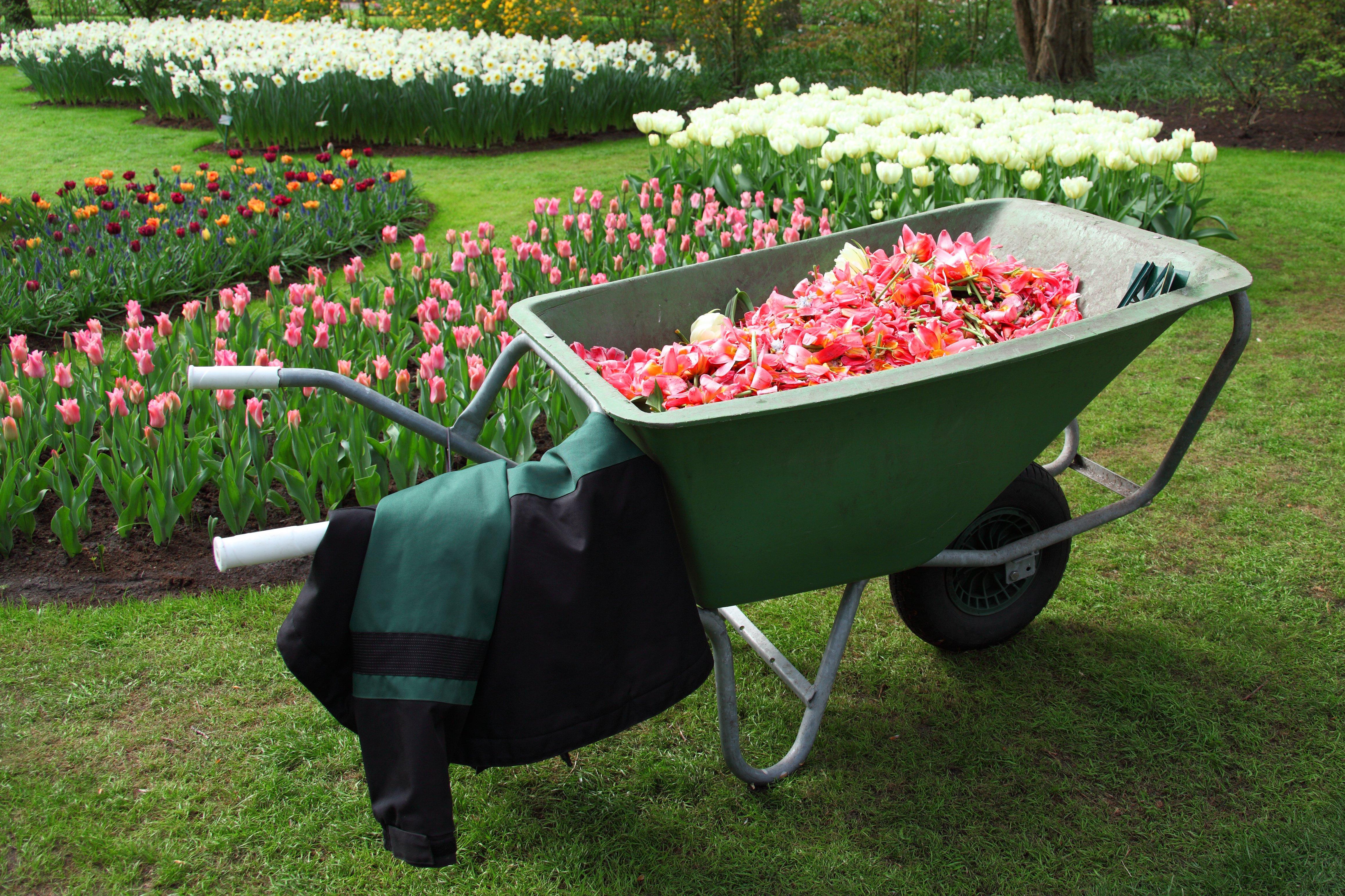 Kur išmesti elektrinius sodo, daržo įrankius?