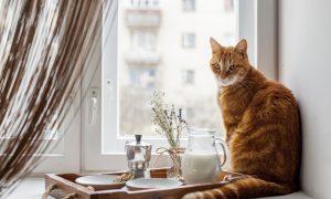 Kaip padėti prislėgtam gyvūnui?