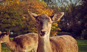 Gegužė išsiskiria gyvūnų aktyvumu