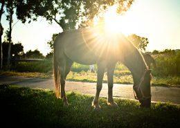 žirgų terapija