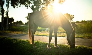 Žirgas – tarsi gydytojas