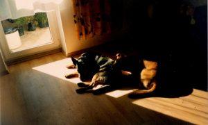 Kaip tinkamai drėkinti patalpų orą?
