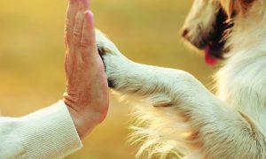 Šunų letenoms netinka dezinfekavimo skysčiai!