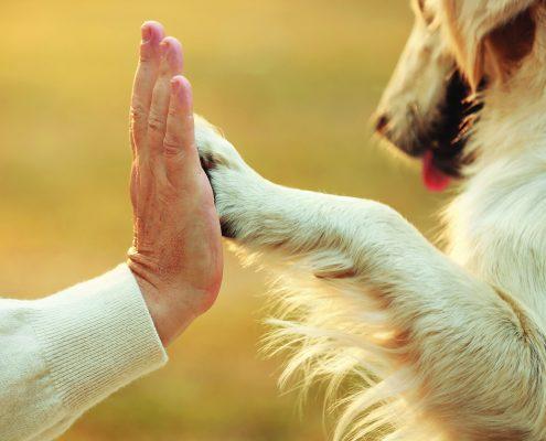 Senstančių šunų negalavimai