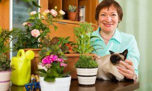 Kada katės elgesys – ligos požymis?