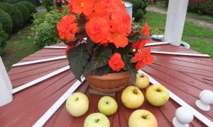 Obuolių nauda