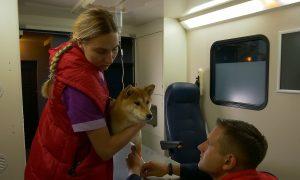 Greitoji medicinos pagalba gyvūnams