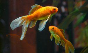 Akvariumas – dalelė gamtos namuose