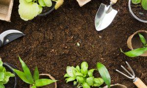 Kada ir kaip tręšti augalus?