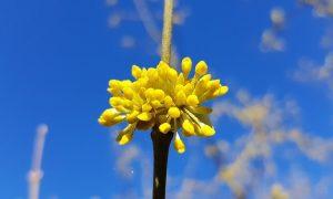 Pažinkite augalų turtus
