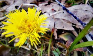 Naudingas ar nuodingas augalas?