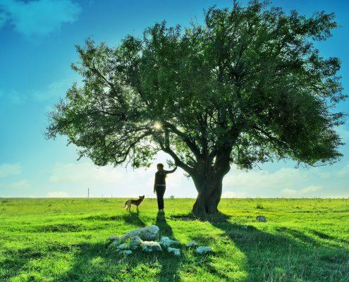medžių energetika