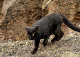 agresyvi katė