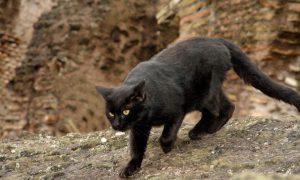 Kodėl katės tampa agresyvios?