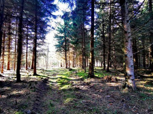 kaip nepasiklysti miške